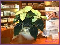 dekoracje wykonane przez Candida pracownia dekoracji tel. 504 055 969 candida@candida.com.pl dla Labolatorium Kosmetycznego Dr Irena Eris