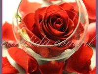 dekoracje stolików bankietowych, dekoracje eventowe, kwiaty na konferencję prasową BZ WBK z udziałem Kevin Spacey