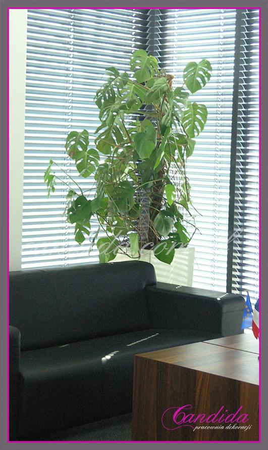 Dekoracja gabinetu kwiatami doniczkowymi.
