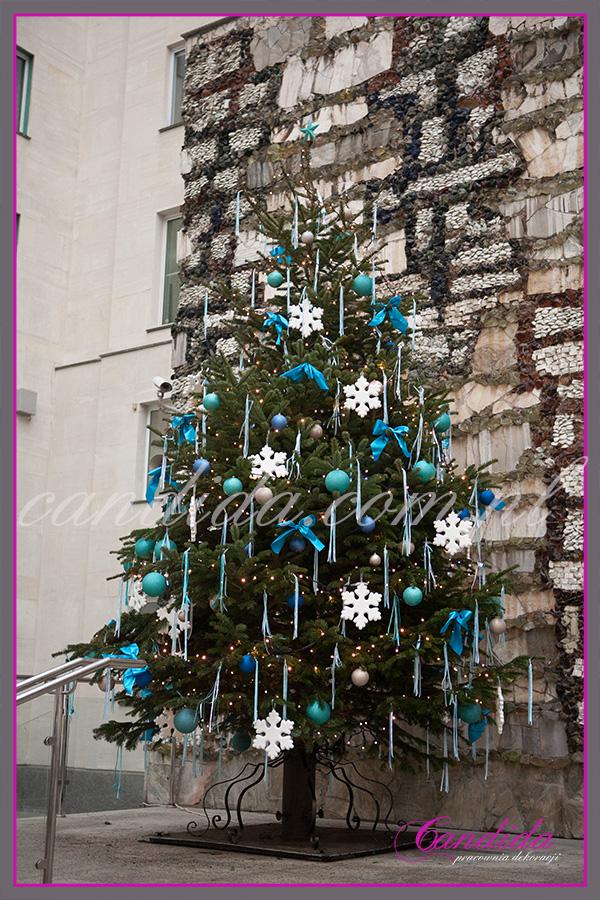 dekoracja choinki żywej, jodła wysokość ponad 5 metrów